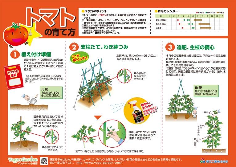 Gadenet(ガデネット)朝日工業株式会社 トマトの育て方