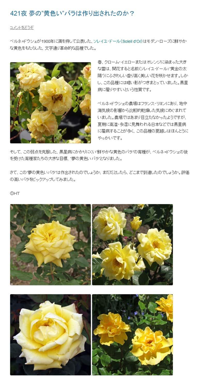 """Gadenet(ガデネット)田中敏夫- ggrosarianペルネ=ドウシェが1900年に満を持して公表した、ソレイユ・ドール(Soleil d'Or)はモダン・ローズに鮮やかな黄色をもたらした、文字通り革命的な品種でした。 Solei d'Or春、クローム・イエローまたはオレンジに染まった大きな蕾は、開花すると名前(ソレイユ・ドール:""""黄金の太陽"""")にふさわしい香り高く美しい花を咲かせます。しかし、この品種には暗い影がつきまとっていました。黒星病に罹りやすいという性質です。"""