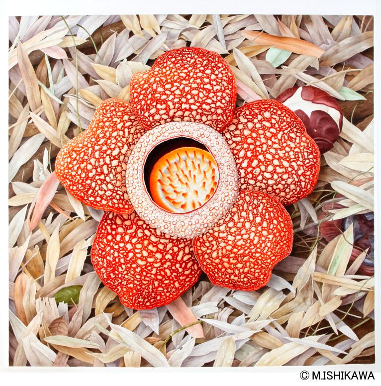 Gadenet(ガデネット)石川 美枝子植物画 Rafflesia keithii ラフレシア・キースィイ