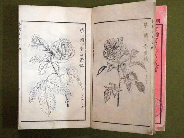 Gadenet(ガデネット)「薔薇栽培法(サミュール・パンソン氏)」