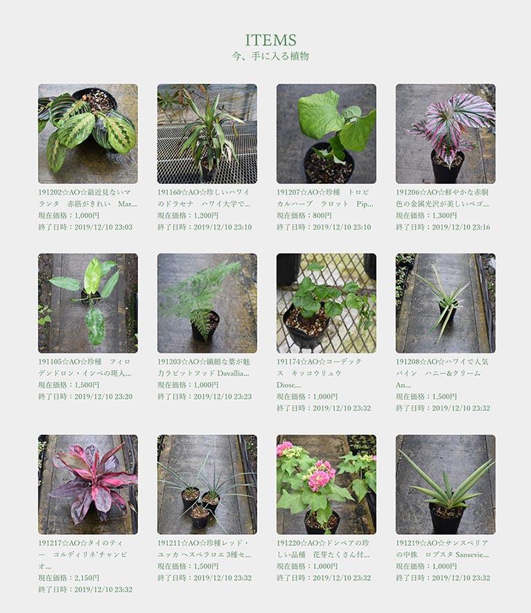今、手に入る植物エクゾティックプランツ