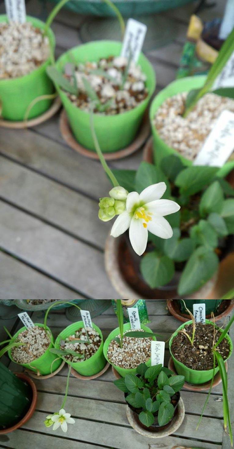 第4回JGN音羽サロン「植物マニアの東チベット紀行」