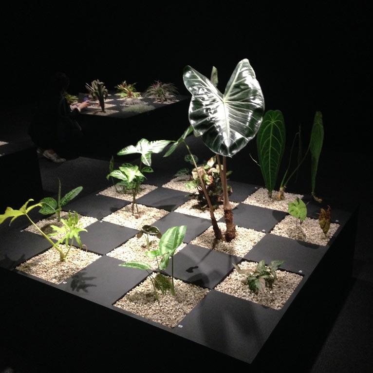プラントハンター 西畠清順世界の植物文様展