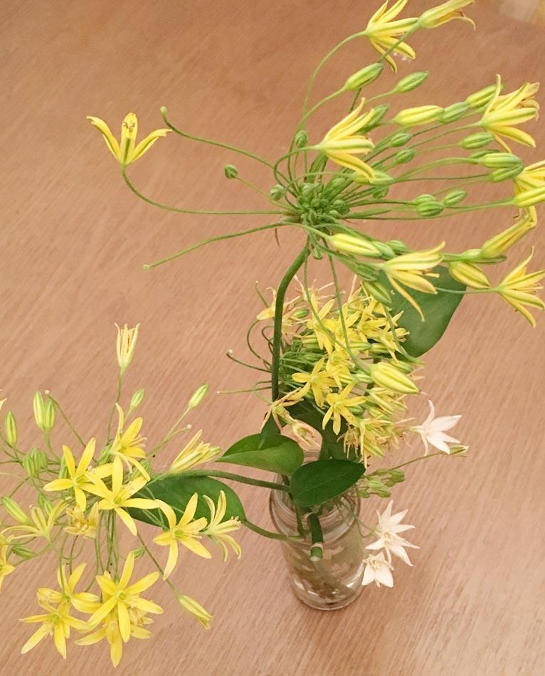 昨年の10月に会員プレゼントでいただいた、三宅花卉園さんのトリテレイアとブローメリアの球根が、5月中旬くらいから咲いてくれています♪株式会社コンチェルト ガーデン事業 木下