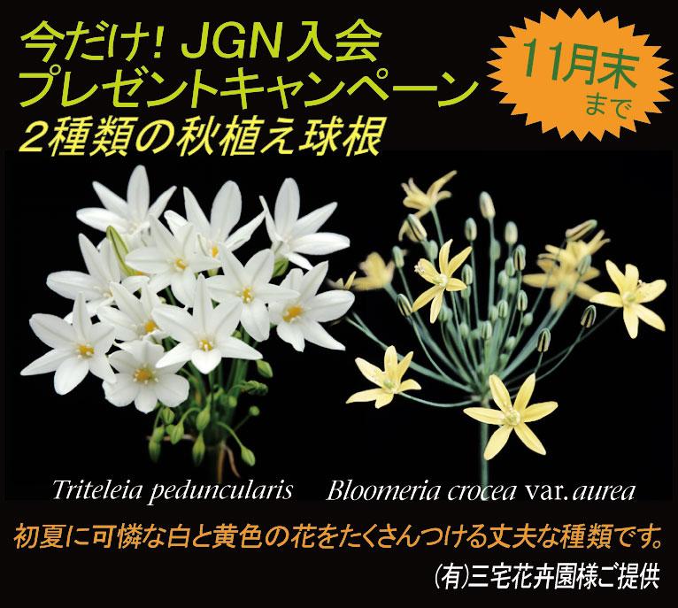 今だけ!JGN入会プレゼントキャンペーン(期間限定2016年11月末日まで)
