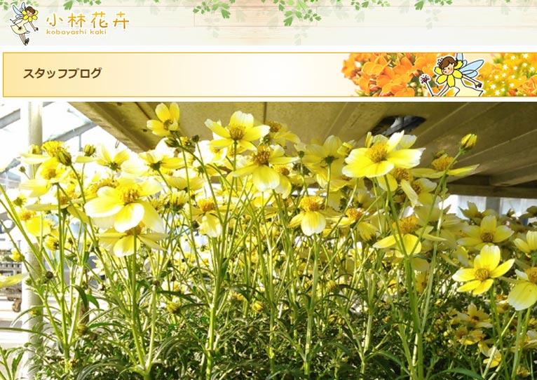 小林花卉 スタッフブログを毎日更新しています!