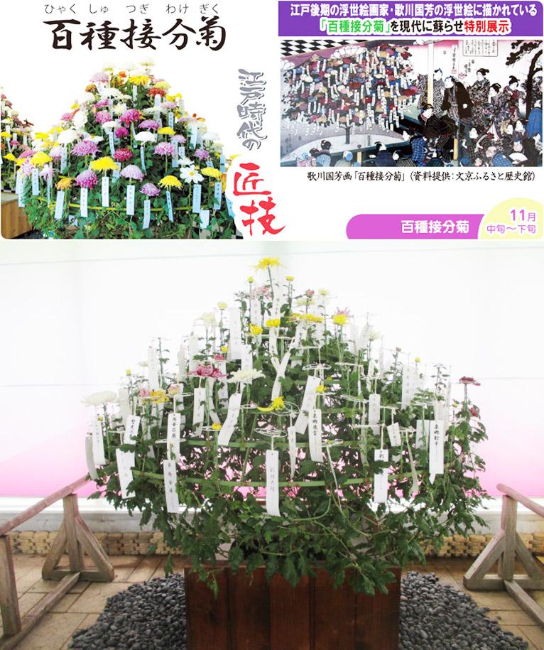 2016年11月1日~30日『菊の季節』はままつフラワーパーク