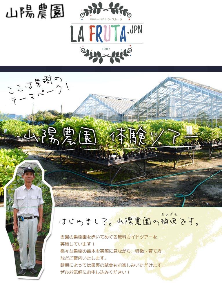 山陽農園果樹園体験ツアー