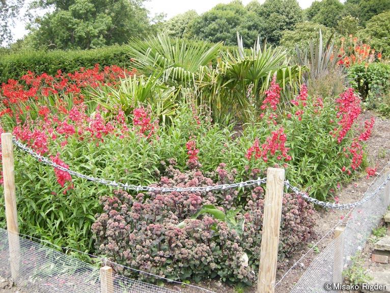NGSイエローブック ガーデン オープンデイポートリムロングボーダー赤の植栽