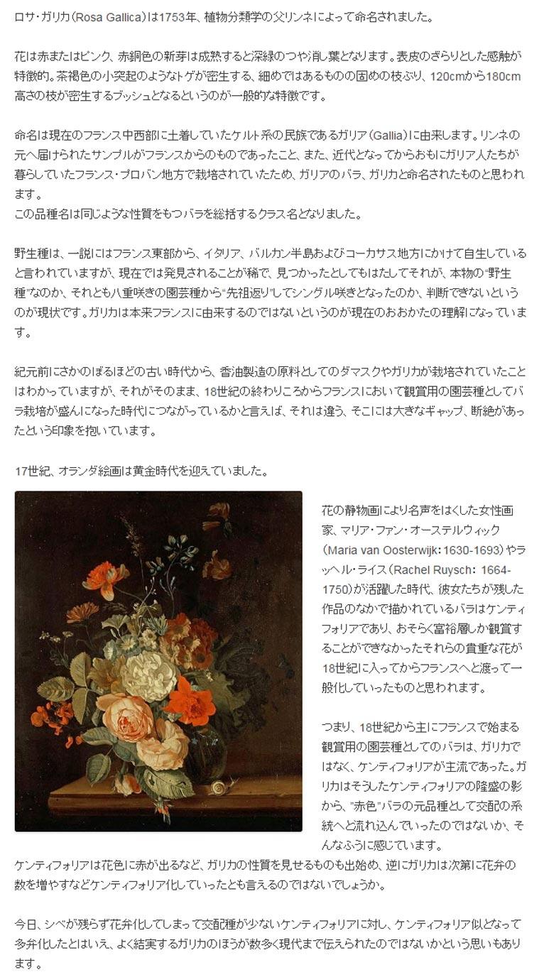 426夜 古々ガリカ ロサ・ガリカ(Rosa Gallica)は1753年、植物分類学の父リンネによって命名されました。花は赤またはピンク、赤銅色の新芽は成熟すると深緑のつや消し葉となります。表皮のざらりとした感触が特徴的。茶褐色の小突起のようなトゲが密生する、細めではあるものの固めの枝ぶり、120cmから180cm高さの枝が密生するブッシュとなるというのが一般的な特徴です。命名は現在のフランス中西部に土着していたケルト系の民族であるガリア(Gallia)に由来します。リンネの元へ届けられたサンプルがフランスからのものであったこと、また、近代となってからおもにガリア人たちが暮らしていたフランス・プロバン地方で栽培されていたため、ガリアのバラ、ガリカと命名されたものと思われます。 この品種名は同じような性質をもつバラを総括するクラス名となりました。