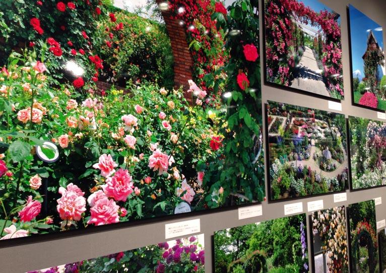 輝くバラたちの庭 写真展見てきました