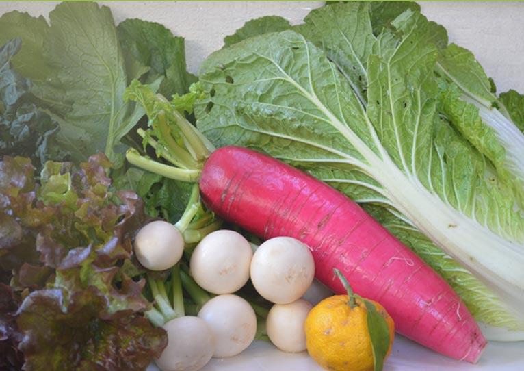 NPO法人「野菜と文化のフォーラム」の講演会「第二回 野菜の価格の仕組み講演会」に行ってきました。