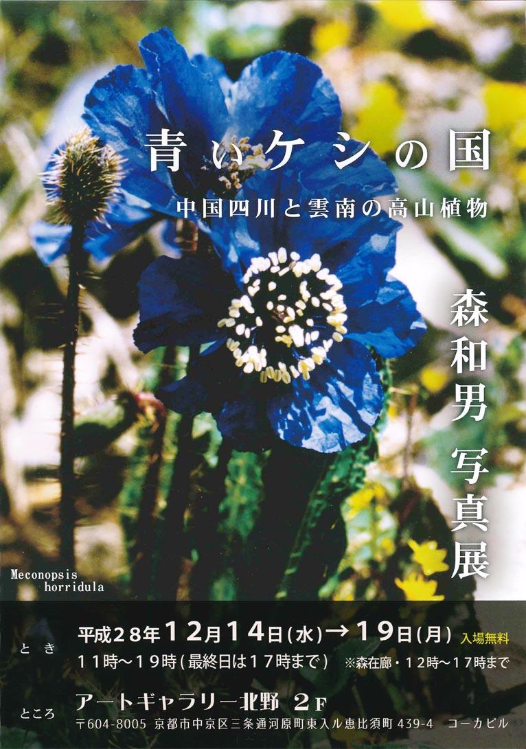 2016年12月14日~19日青いケシの国中国四川と雲南の高山植物
