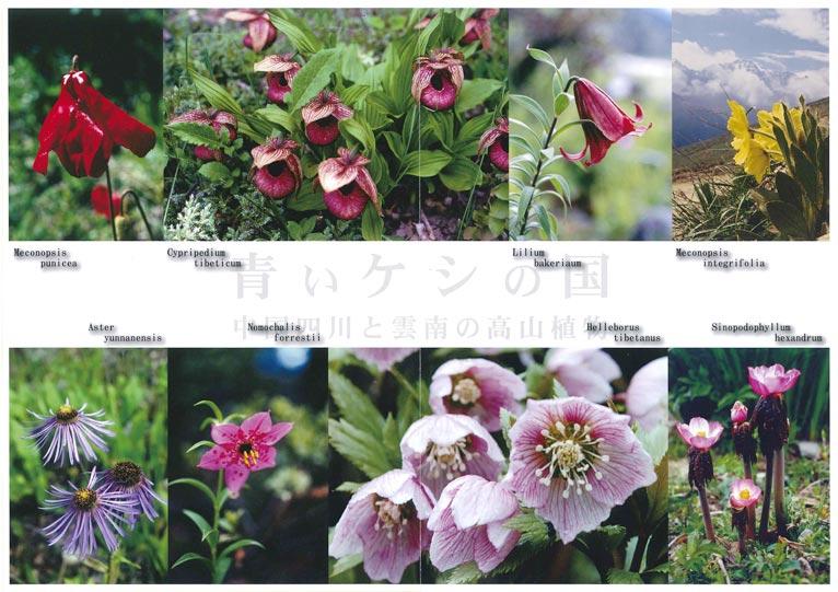 2016年12月14日~19日青いケシの国中国四川と雲南の高山植物 森和男 写真展 アートギャラリー北野(京都)