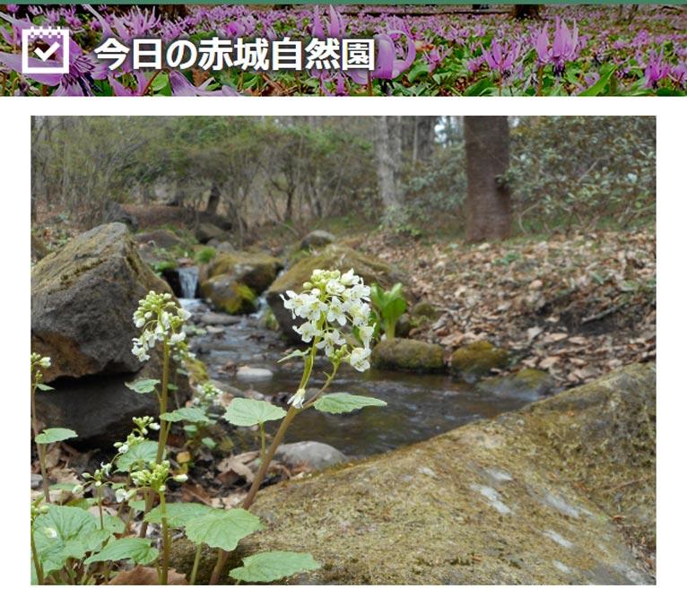 今日の赤城自然園