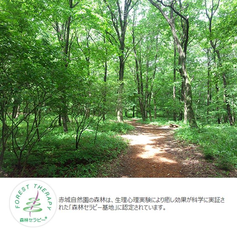 赤城自然園散策プログラム 森林セラピー講座【無料】赤城自然園の森林は、生理心理実験により癒し効果が科学に実証された「森林セラピー基地」に認定されています。