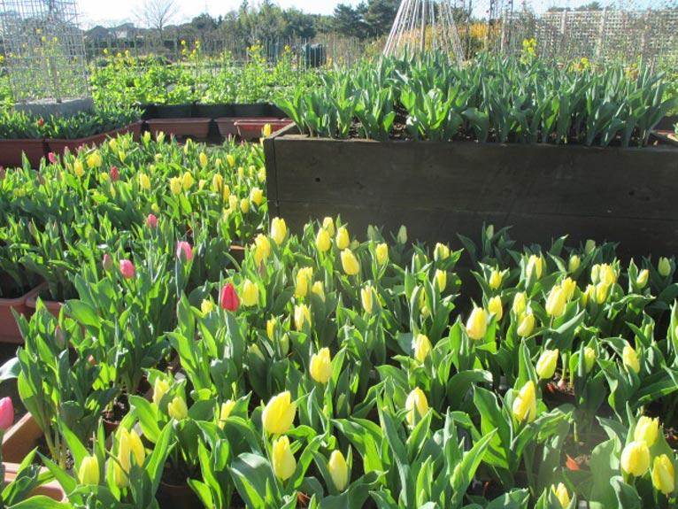 e-flowerpark170101-2-766