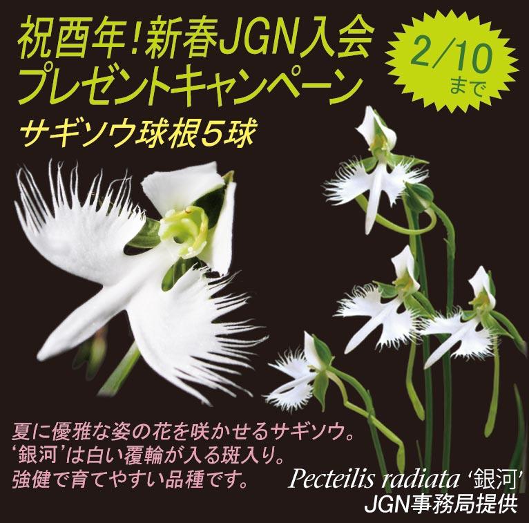 祝酉年!新春JGN入会プレゼントキャンペーン(期間限定2017年2月10日まで)