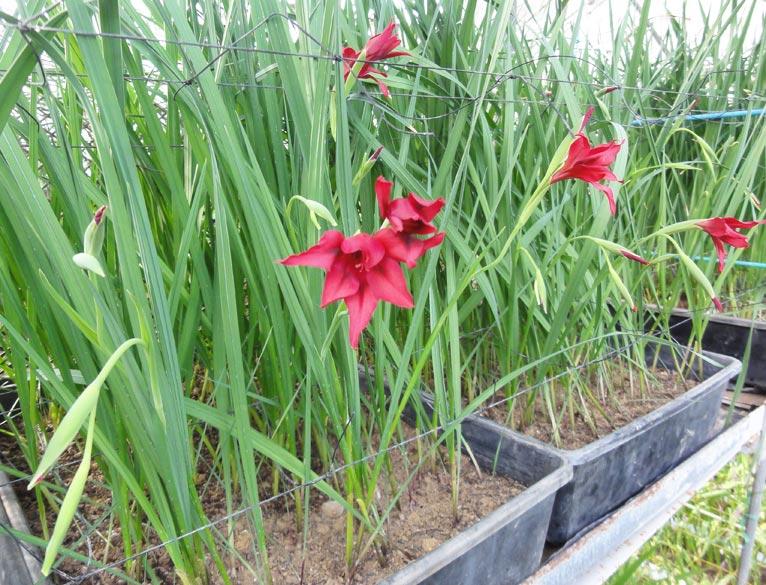 2017年2月26日JGNスペシャル・ナーセリーツアー「三宅花卉園見学会~次々と革命的な新品種を生み出す三宅さんによるご案内~」を終えて