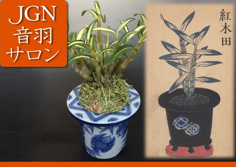 第7回JGN音羽サロン「伝統園芸植物を育ててみよう!~長生蘭の植え替え実習と栽培法~」