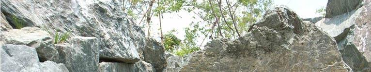 syokubutsuhyappan3-top-766-150