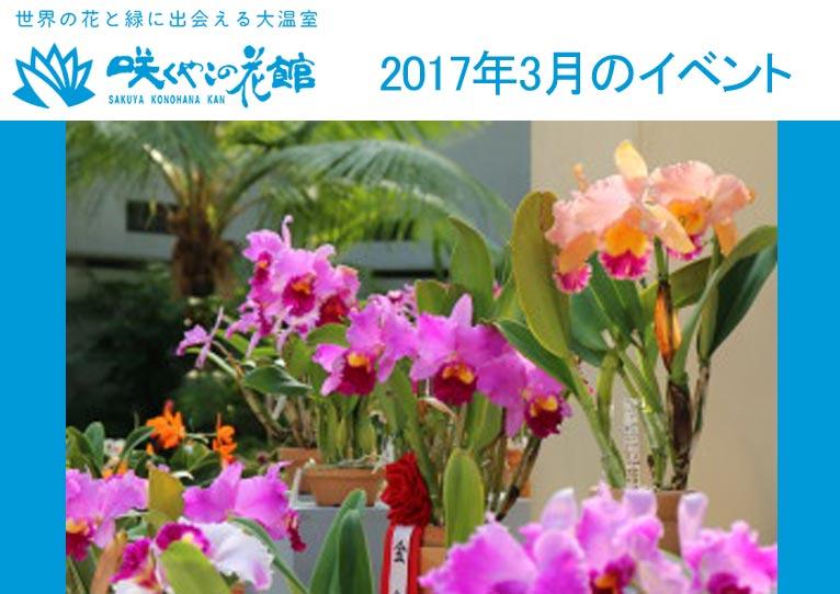 咲くやこの花館2017年3月のイベント3月14~20日春の洋ラン展3月25・26日春蘭展