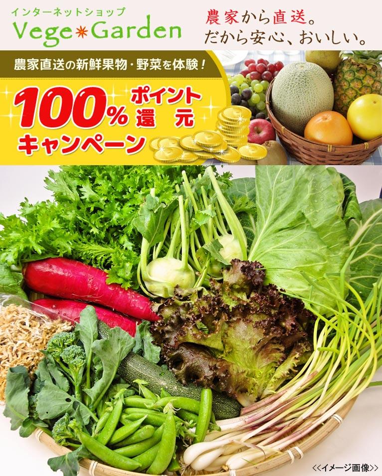 100%ポイント還元!農家直送の新鮮果物・野菜体験キャンペーン ベジガーデン Vege Garden 朝日工業(株)