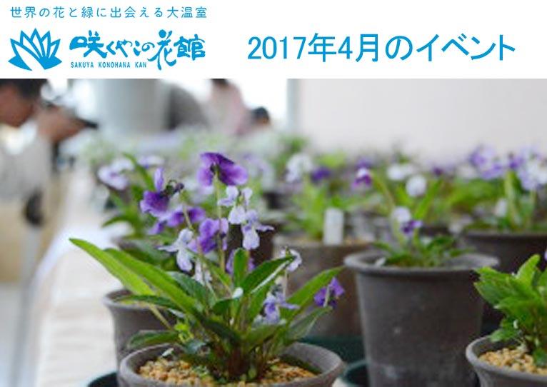 咲くやこの花館 2017年4月のイベント