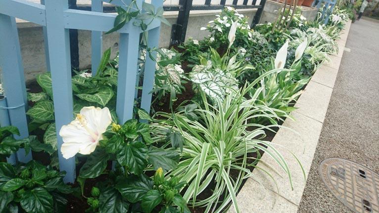 はままつフラワーパーク2017年9月のイベント5月28日~9月18日大温室 ガーデンシアター夏展示