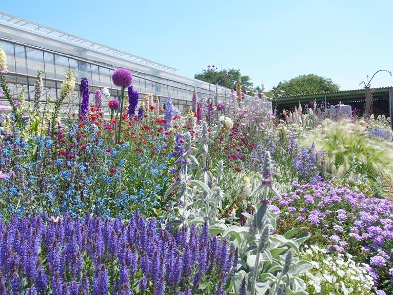 2017年5月17日JGNスペシャル・ナーセリーツアー山本花園&エフメールナガモリ見学会~サルビアと花苗のナーセリーを解説付きで見学、買い物もできます!~