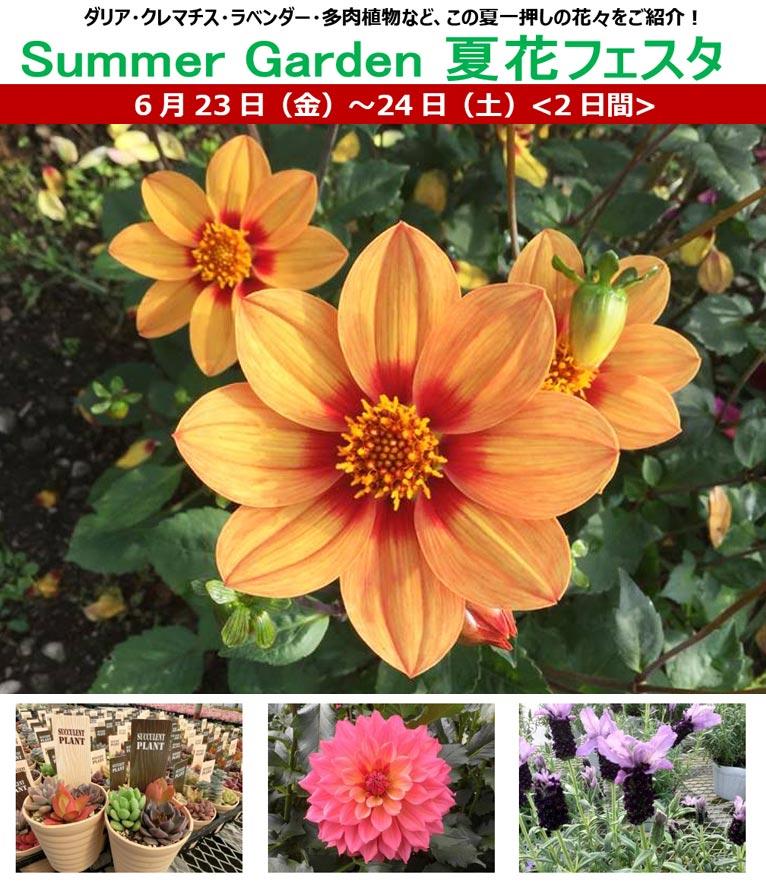 2017年6月23・24日 Summer Garden 夏花フェスタ ダリア・クレマチス・ラベンダー・多肉植物など、この夏一押しの花々をご紹介!