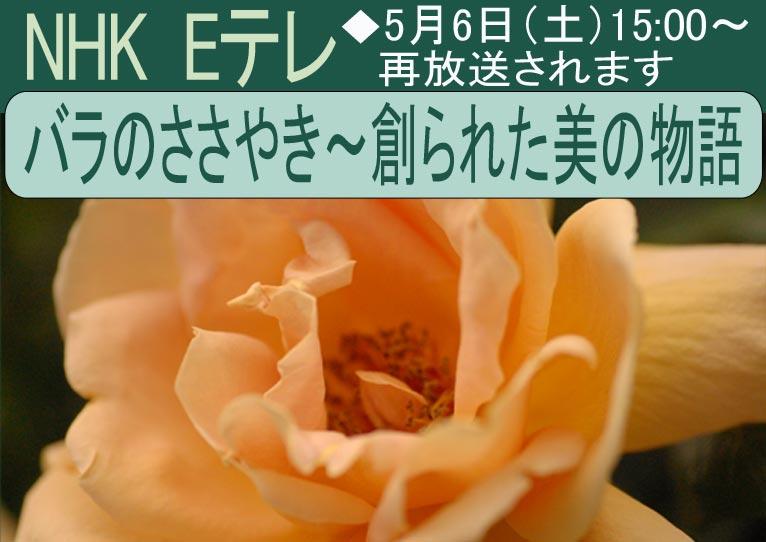2017年5月6日15:00~ NHK Eテレ 「バラのささやき~創られた美の物語」 再放送されます