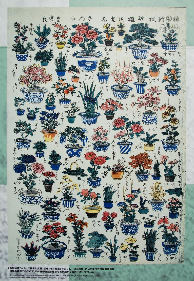 第8回世界盆栽大会inさいたま「日本の盆栽水石至宝展」に行ってきました!新板鉢植つくし 二代歌川広重 さいたま市大宮盆栽美術館
