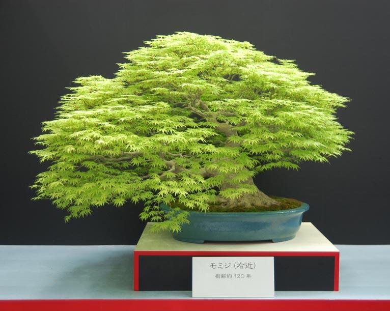 第8回世界盆栽大会inさいたま「日本の盆栽水石至宝展」に行ってきました!
