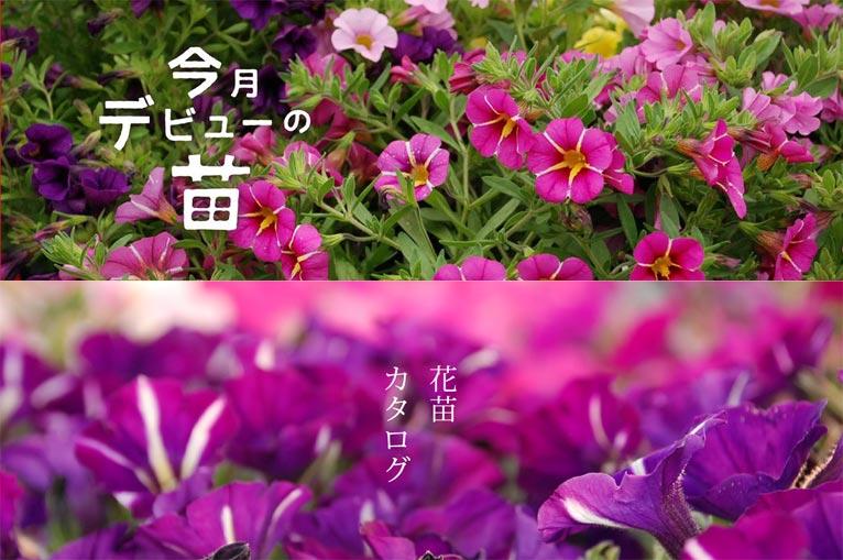 むらかみ農園の今月デビューの苗&花苗カタログ