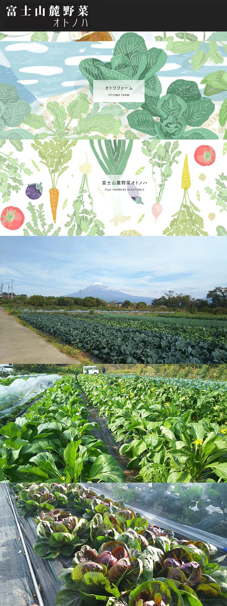 通信販売サイト 富士山麓野菜オトノハ