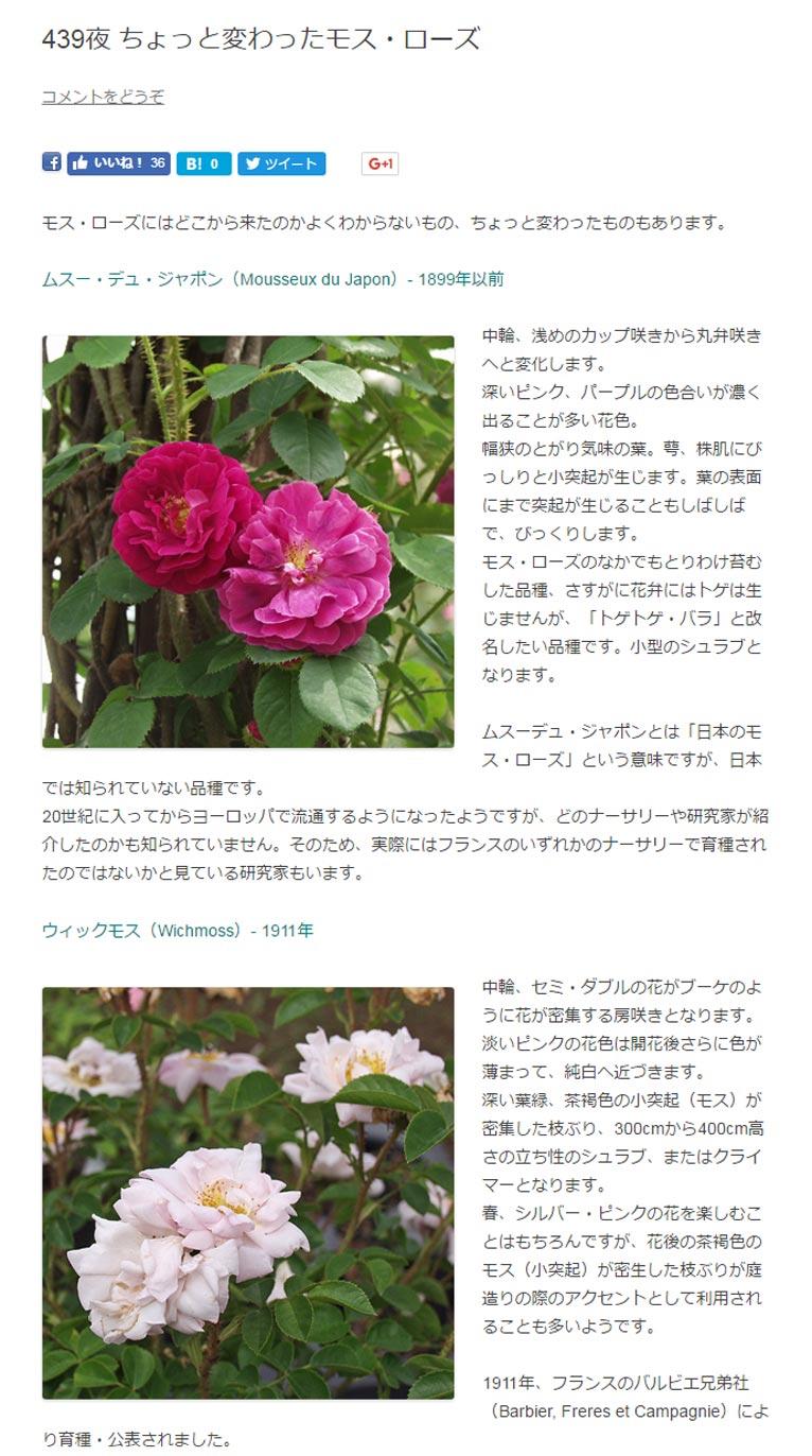 モス・ローズにはどこから来たのかよくわからないもの、ちょっと変わったものもあります。  ムスー・デュ・ジャポン(Mousseux du Japon)- 1899年以前  中輪、浅めのカップ咲きから丸弁咲きへと変化します。 深いピンク、パープルの色合いが濃く出ることが多い花色。 幅狭のとがり気味の葉。萼、株肌にびっしりと小突起が生じます。葉の表面にまで突起が生じることもしばしばで、びっくりします。 モス・ローズのなかでもとりわけ苔むした品種、さすがに花弁にはトゲは生じませんが、「トゲトゲ・バラ」と改名したい品種です。小型のシュラブとなります。  ムスーデュ・ジャポンとは「日本のモス・ローズ」という意味ですが、日本では知られていない品種です。 20世紀に入ってからヨーロッパで流通するようになったようですが、どのナーサリーや研究家が紹介したのかも知られていません。そのため、実際にはフランスのいずれかのナーサリーで育種されたのではないかと見ている研究家もいます。