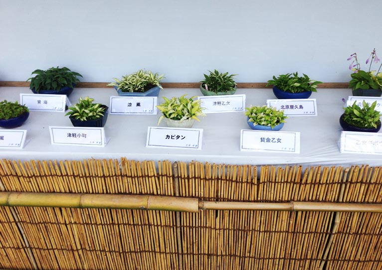 神代植物公園ぎぼうし展セミナーに参加してきました