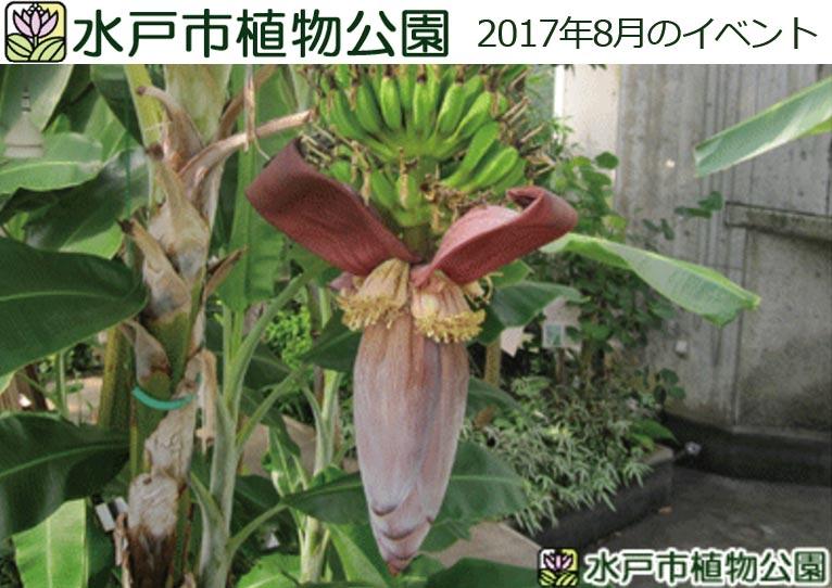 水戸市植物公園 2017年8月のイベント
