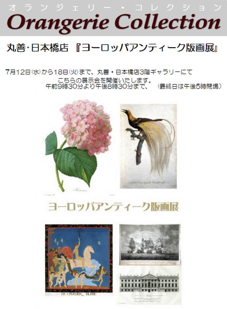 2017年7月12~18日 丸善・日本橋店 『ヨーロッパアンティーク版画展』 植物画を展示販売します! オランジェリー・コレクション