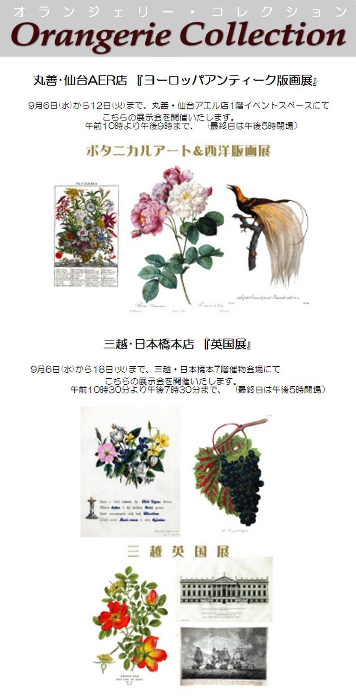 2017年9月6~12日丸善・仙台AER店『ヨーロッパアンティーク版画展』 9月6~18日三越・日本橋本店『英国展』 植物画を展示販売します! オランジェリー・コレクション