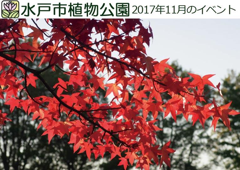 水戸市植物公園 2017年11月のイベント