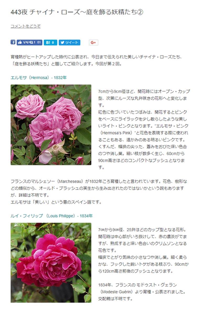 """田中敏夫- ggrosarian「バラ咲く庭の物語」より  育種熱がヒートアップした時代に公表され、今日まで伝えられた美しいチャイナ・ローズたち、「庭を飾る妖精たち」と題してご紹介します。今回が第2回。  エルモサ(Hermosa)- 1832年  7cmから9cm径ほど、開花時にはオープン・カップ型、次第にルーズな丸弁咲きの花形へと変化します。 紅色に色づいていたつぼみは、開花するとピンクをベースにライラックを少し散らしたような美しいライト・ピンクとなります。""""エルモサ・ピンク(Hermosa's Pink)""""と花色を表現する際に使われることもある、温かみのある明るいピンクです。くすんだ、幅狭の尖った、蒼みをおびた深い色合のつや消し葉。細い枝が数多く生じ、60cmから90cm高さほどのコンパクトなブッシュとなります。  フランスのマルシェソー(Marcheseau)が1832年ころ育種したと言われています。花色、樹形などの類似から、オールド・ブラッシュの実生から生み出されたのではないかという説もありますが、詳細は不明です。エルモサは「美しい」という意のスペイン語です。  ルイ・フィリップ (Louis Philippe)- 1834年  7㎝から9㎝径、25弁ほどのカップ型となる花形。 開花時は中心部がいろ抜けして、赤の濃淡がでますが、熟成すると深い色合いのクリムゾンとなる花色です。 幅狭でとがり気味の小さなつや消し葉。細く柔らかな、フックした鋭いトゲがある枝ぶり、90cmから120cm高さ前後のブッシュとなります。  1834年、フランスの モドゥスト・グェラン(Modeste Guérin)より育種・公表されました。交配親は不明です。 ガリカにも、クリムゾン・レッドのルイ・フィリップという品種があり区別するため、ルイ・フイリップ・バミューダ・フォーム(Louis Philippe Bermuda form)と呼ばれることもあります。"""