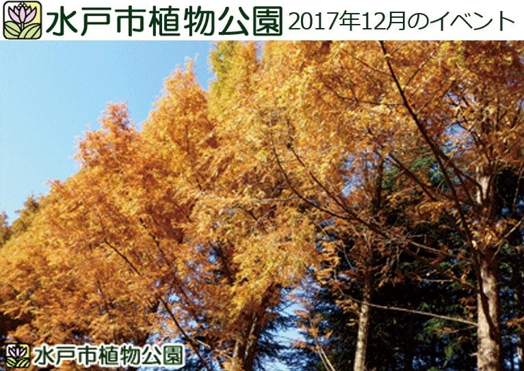 水戸市植物公園 2017年12月のイベント