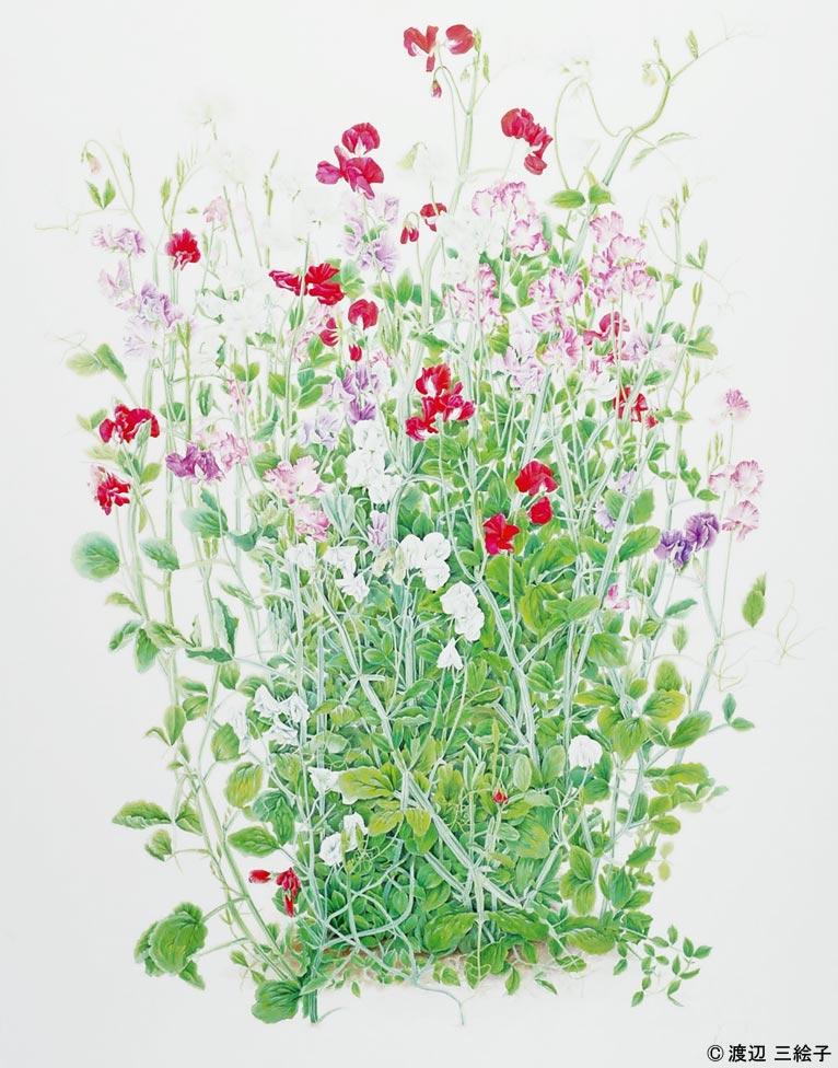 【追加新設5講座・随時募集!】 渡辺 三絵子 花の水彩画教室ご案内 スイートピー