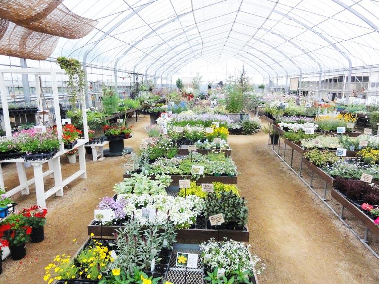 NURSERIES vol.11 むらかみ農園 販売用の元気な苗が並ぶハウス