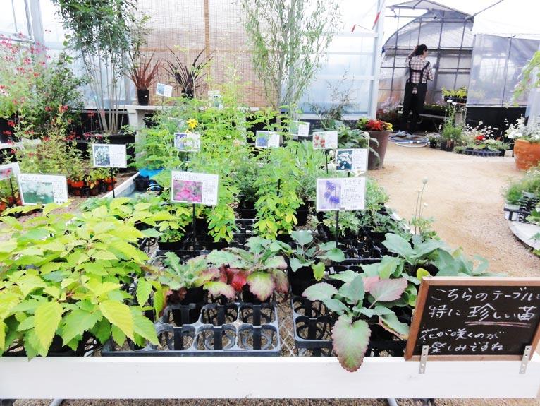 NURSERIES vol.11 むらかみ農園 新顔など珍しい植物の苗が並ぶコーナー
