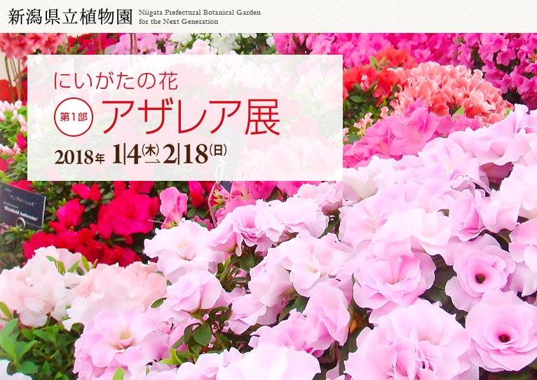 新潟県立植物園 2018年1月4日~2月18日 アザレア展
