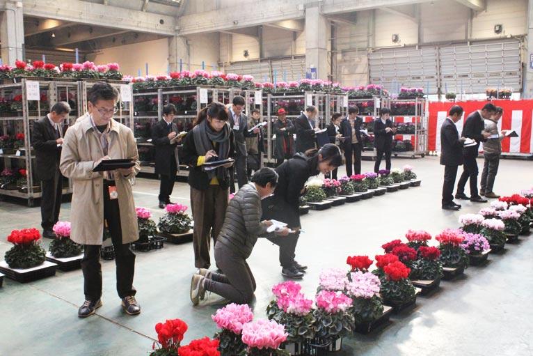去る11月29日に開催された、一般社団法人 日本花き生産協会主催の平成29年度全国花き品評会の審査の様子。栃木県の吉原一成さんのシクラメン'ピアス'がジャパン・ガーデナーズ・ネットワーク賞を受賞されました。