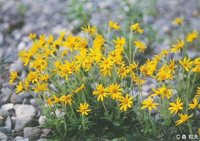 創立メンバー 森 和男さん 松下幸之助花の万博記念賞 松下正治記念賞を受賞されました